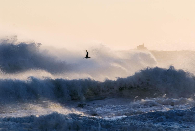 2012, Aquamarine Power Ltd, Brough Head Wave Farm, Kelp Harvesting